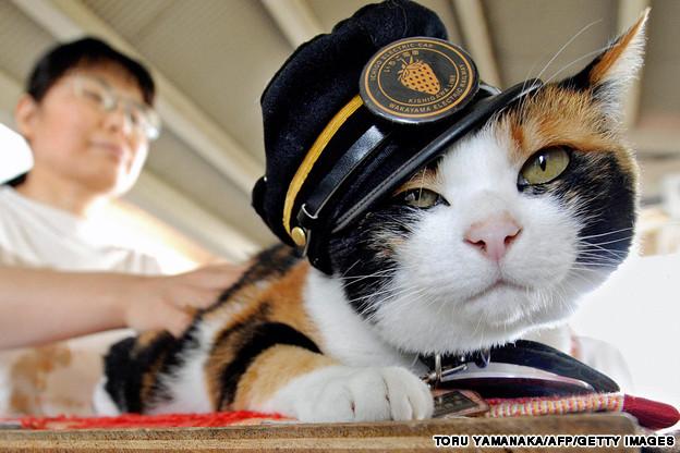 Tama, kucing yang jadi kepala stasiun Kishi. - Foto: Toru Yamanaka / Getty Images