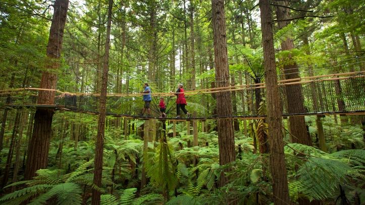 Hutan Redwood, rumah dari Pete dan Elliot dalam film Pete's Dragon - Foto: Tourism New Zealand