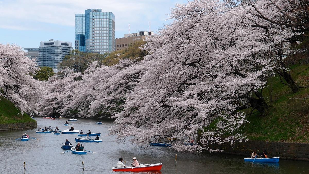 5 Hal Seru di Tokyo Agar Traveling Lebih Berkesan